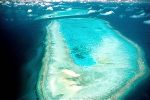 Après la banquise , la Grande Barrière de corail en danger
