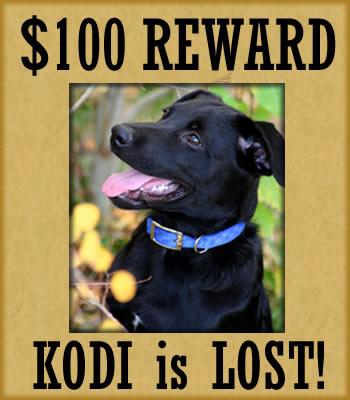 La disparition de Kodi : 100 dollars de récompense à l'internaute ou webmaster qui le retrouvera !