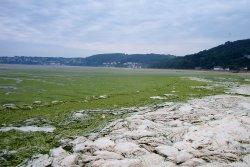 Energie verte : vive les Algues de Bretagne