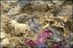 Découverte macabre en Irak