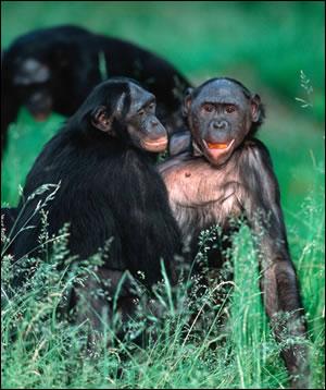 Sexualité : Réveillez l'Animal, qui sommeille, en Vous!!!