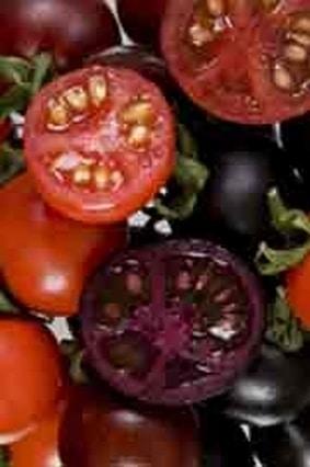 Une tomate OGM contre le cancer