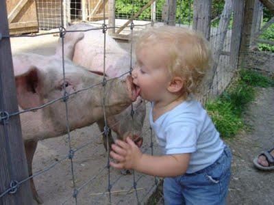 La Grippe Porcine : Le Nouvel Opium du Peuple ??