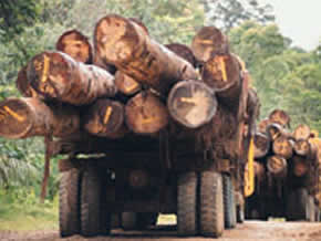 2011: L'année Internationale de la Forêt.