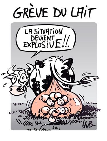 Grève du lait… la vache !