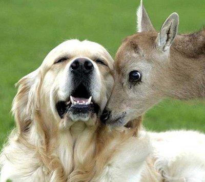 Oyez, oyez braves gens…écoutez le cri de l'amitié !
