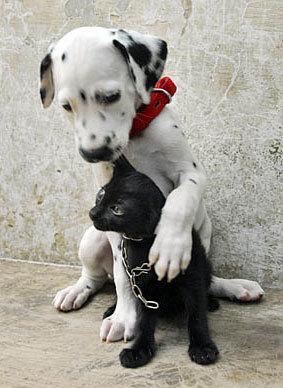 Plus de chiens dans les assiettes chinoises ?