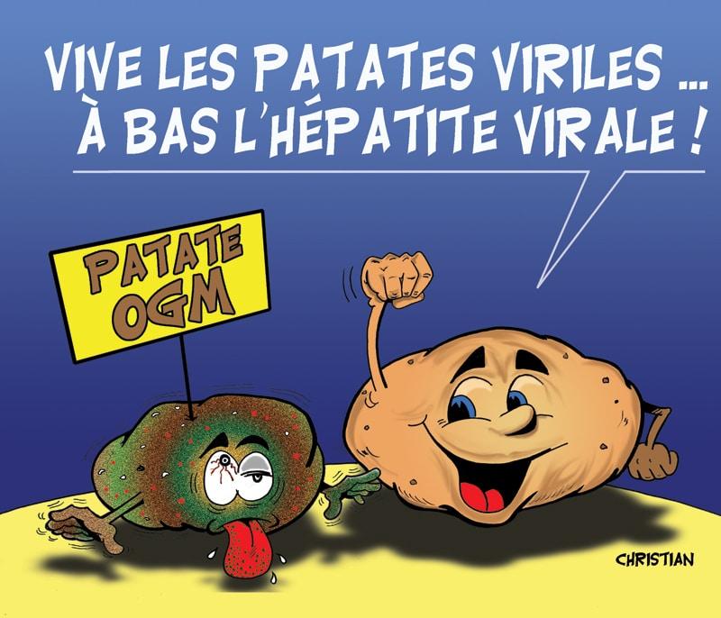 Pas de patate OGM en France «dans l'immédiat» …