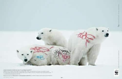 Quand le WWF tague les animaux…