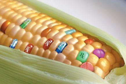 «Avantages» des OGM…