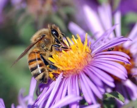 Que faire pour sauver les abeilles ?