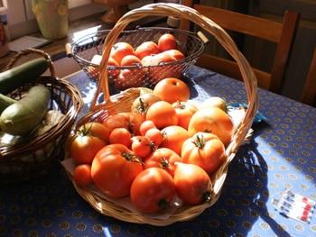 On dit que les tomates n'ont plus de goût.