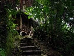 Escale en forêt amazonienne