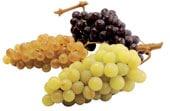 Une cure de raisin c'est très bénéfique !