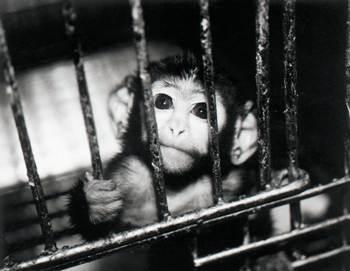 Justice inhumaine envers les animaux