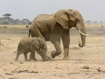 Vacances et safari, un vrai bonheur!