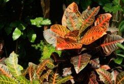 Peut-on faire confiance à la phytothérapie ?