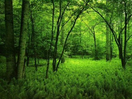 Promenons- nous dans la nature…