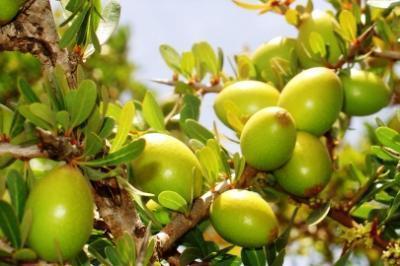 Maroc : Le pays de l'huile d'argan !