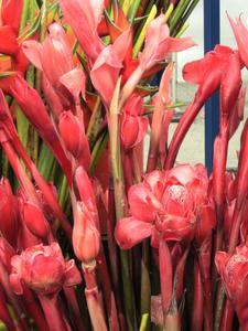 Le pouvoir des fleurs Colombiennes