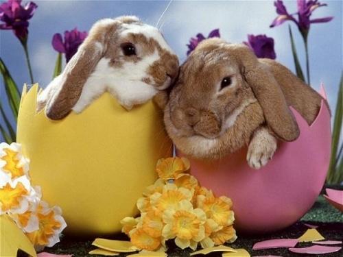 Les lapins de Pâques inspirés d'un jouet pour chien !