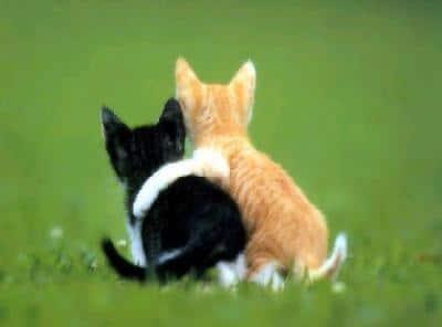 L'importance de l'amitié