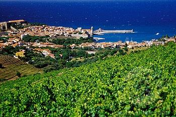 Collioure, le tour d'une appellation.