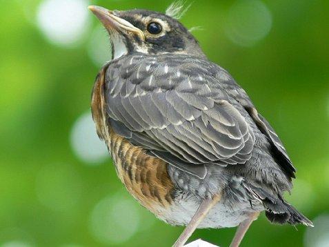 Un constat inquiétant sur l'avenir des oiseaux.