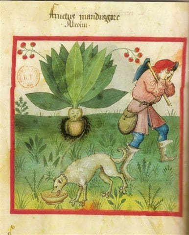 les plantes maléfiques