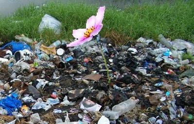 la fleur sur le tas d'ordures