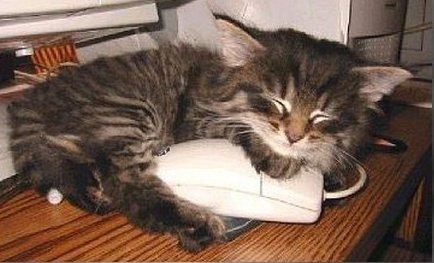 Mon chat ou la vie d'un simple…