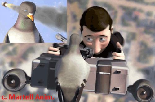 Le pigeon casse la graine et nos « bonbons »