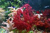 Les bienfaits insoupçonnés de certaines algues.