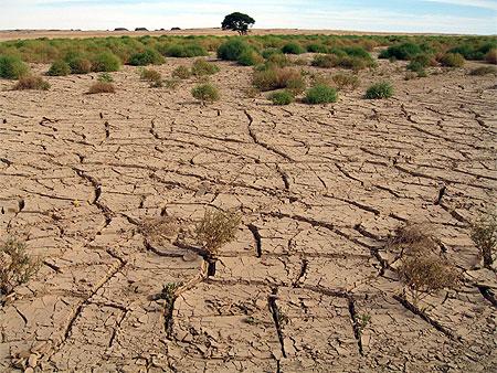 Des plantes contre la sécheresse…