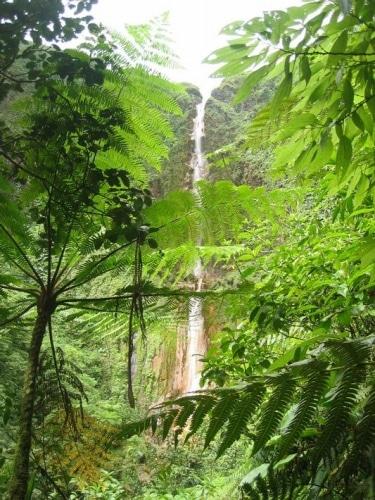 Fort ralentissement de la déforestation au Brésil