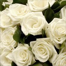 Ces roses je les écris…