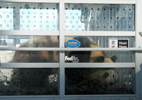 Les deux pandas chinois sont bien arrivés en France.