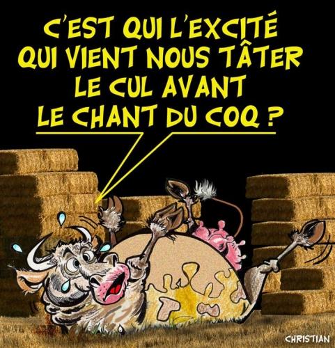 Salon de l'Agriculture : Quand les vaches montent à Paris voir défiler les politiques !