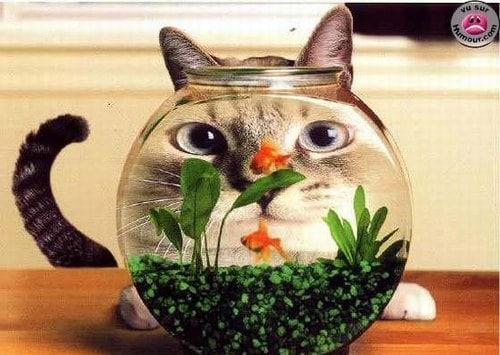 Le jour du poisson