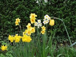 Vos travaux dans le jardin d'agrément en avril