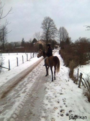 10 conseils pour entrainer son cheval