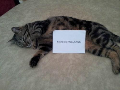 Pour soutenir Hollande… elle dévoile sa chatte sur Twitter !
