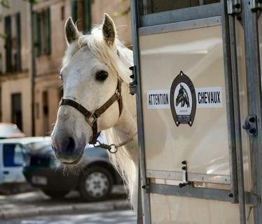 10 conseils pour circuler en ville à cheval
