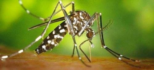 Le sud ouest est touché par les maladies tropicales