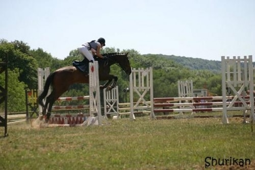 Equitation : Semaine : rien, week end : concours!