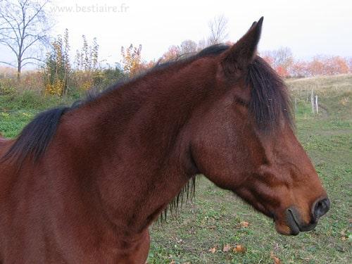 Le stress du cheval