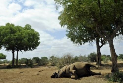 Un cimetière d'éléphant