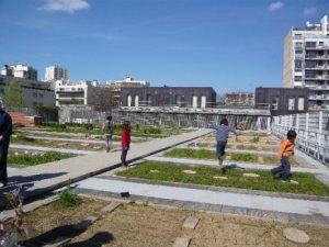 Des expériences de potagers sur les toits des immeubles à Paris.