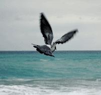 Cervelle d'oiseau : une dérive de 5 400 km
