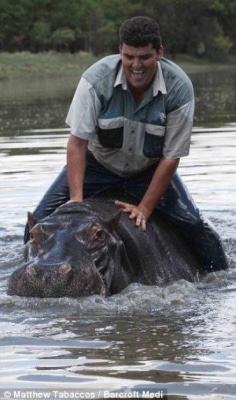L'hippopotame, qui est -il ?